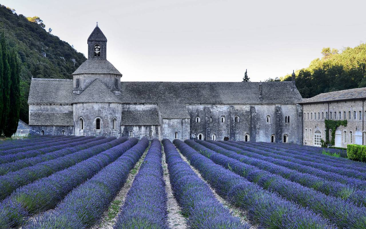 Lavender fields luxury hotel Les Bories in Gordes